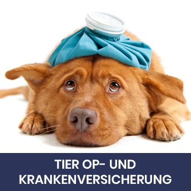 Tier OP-und Krankenversicherung